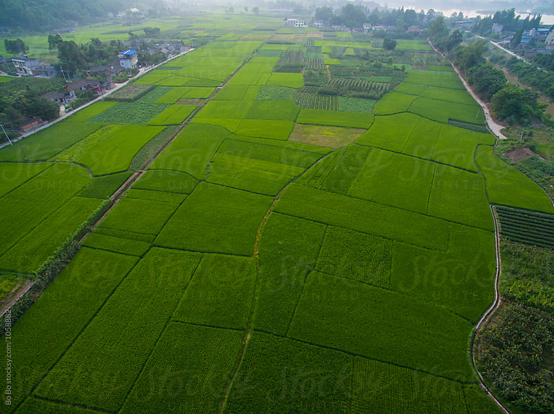 aerial view of rice paddy and village by Bo Bo for Stocksy United