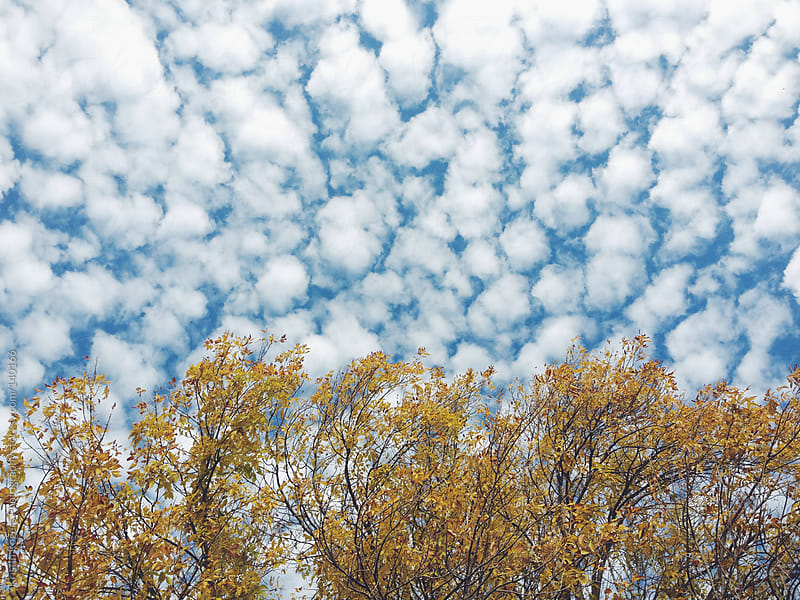 Puffy white clouds with trees by Kristin Rogers Photography for Stocksy United