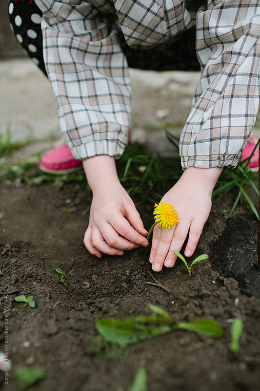 Child girl planting flowers in the garden  by Sergey Filimonov for Stocksy United