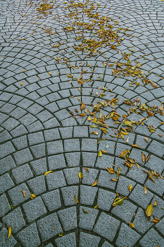 Autumn Leaves falling on old cobbled road by Rowena Naylor for Stocksy United