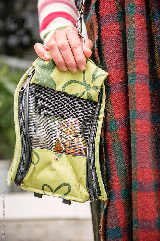 Woman holding portable container with parrot by Lawren Lu for Stocksy United