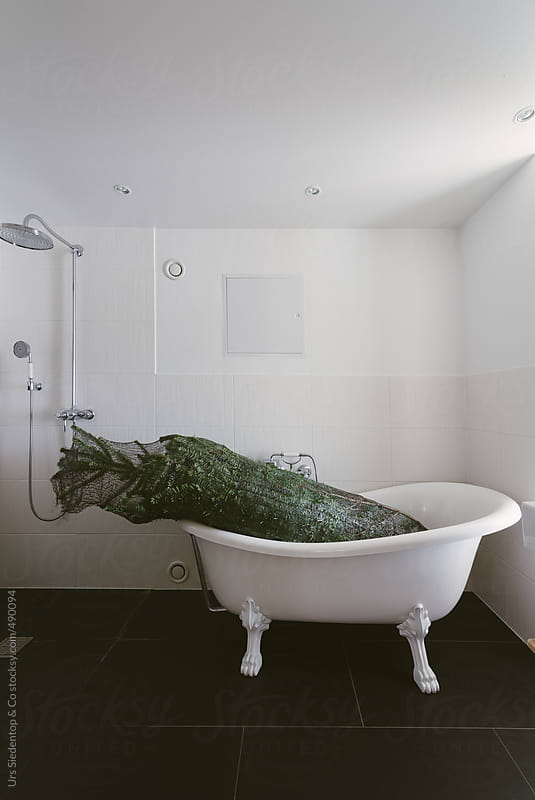 Christmas tree in bath tub by Urs Siedentop & Co for Stocksy United