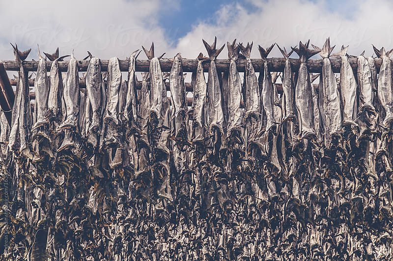 drying fish by Andreas Gradin for Stocksy United