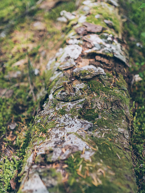 tree covered with moss in rain forest by unite  images for Stocksy United