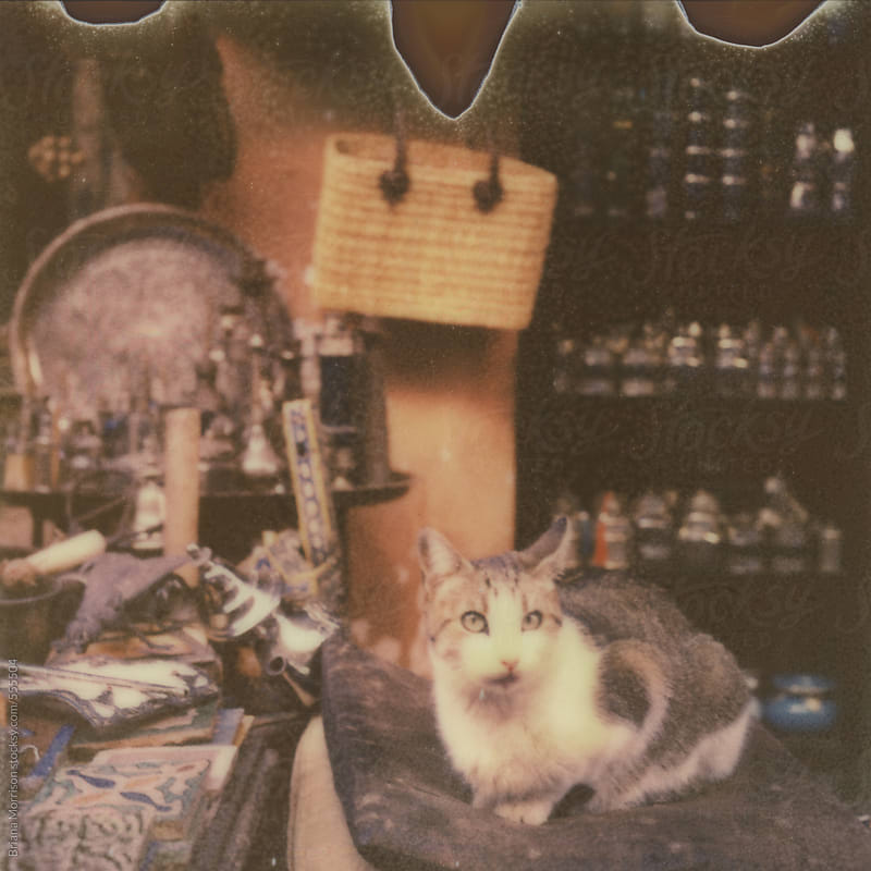 Retro Portrait of a Cat Sitting in Front of a Moroccan Shop by Briana Morrison for Stocksy United