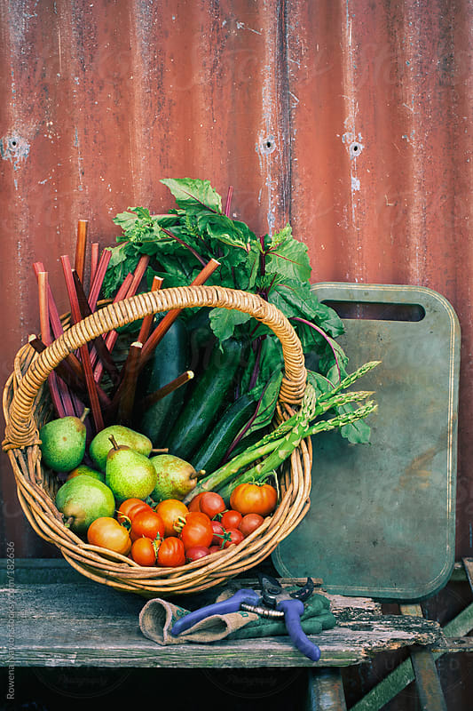 Basket of Organic Fruits & Vegetables just harvested by Rowena Naylor for Stocksy United