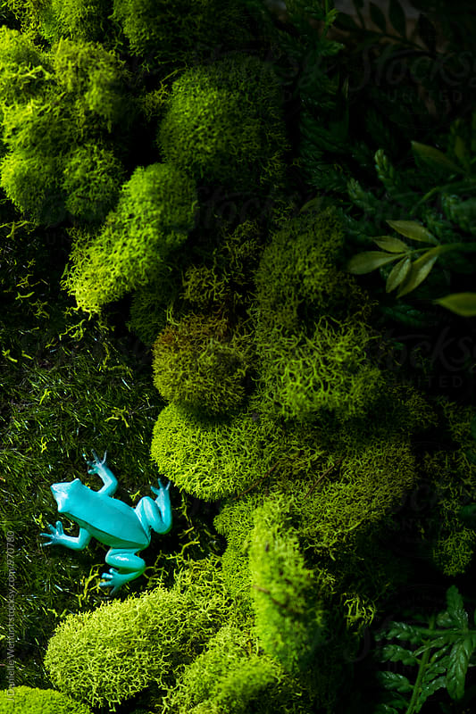 A blue frog in the grass and moss by J Danielle Wehunt for Stocksy United