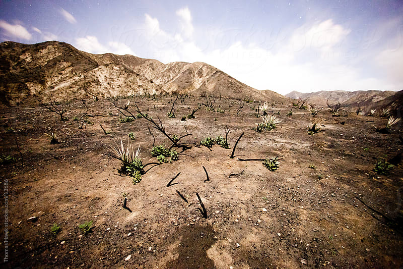 Fire Damage, Angeles National Forest, California by Thomas Hawk for Stocksy United