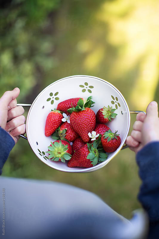 Boy holding colander filled with freshly picked strawberries by Ruth Black for Stocksy United