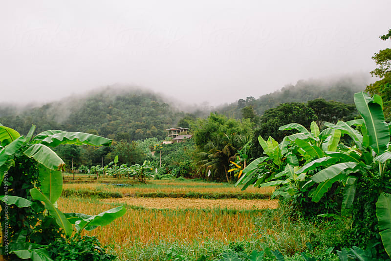 Thailand view of hills and fog over field  by Jesse Morrow for Stocksy United