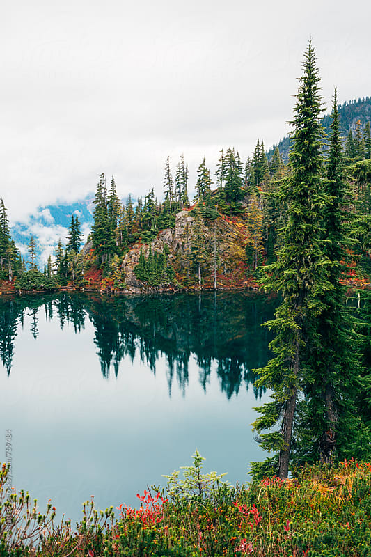 Subalpine Fir Trees At Edge Of Forest Lake by Luke Mattson for Stocksy United
