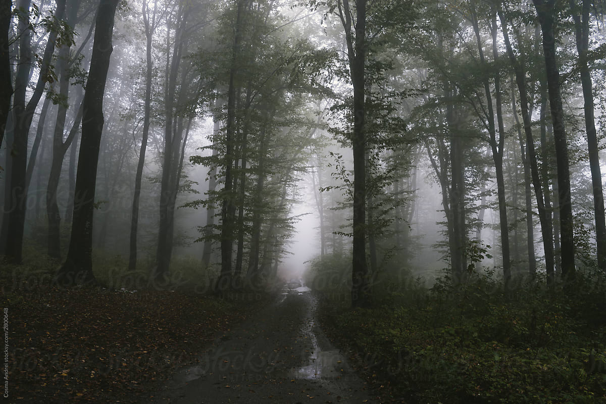 Path Through Mysterious Dark Forest With Fog In Transylvania By Cosma Andrei Spooky Woods Stocksy United