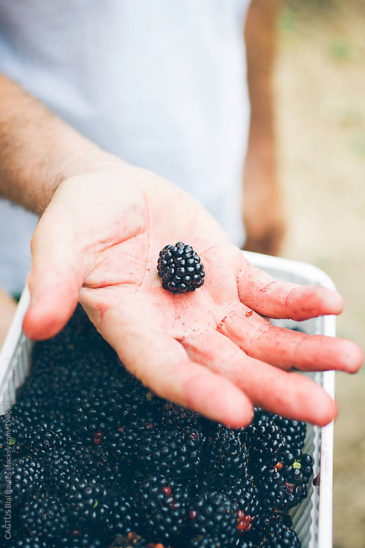 Blackberry picking by CACTUS Blai Baules for Stocksy United