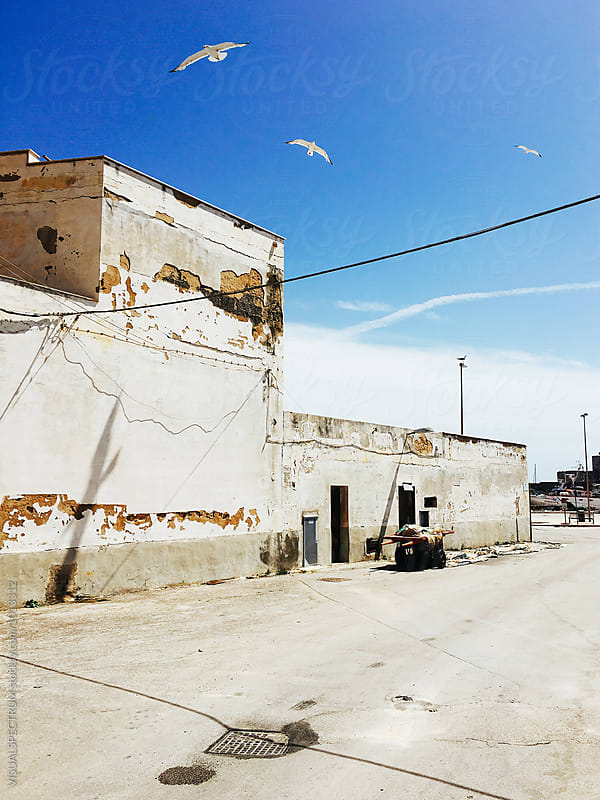 Sicily - Three Seagulls Flying Over Shabby Port Building by VISUALSPECTRUM for Stocksy United