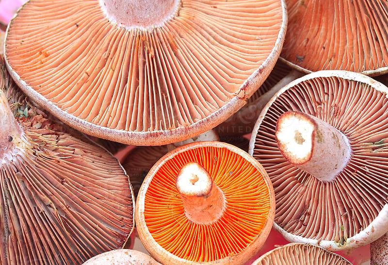 Fresh wild mushrooms by Wenhai Tang for Stocksy United