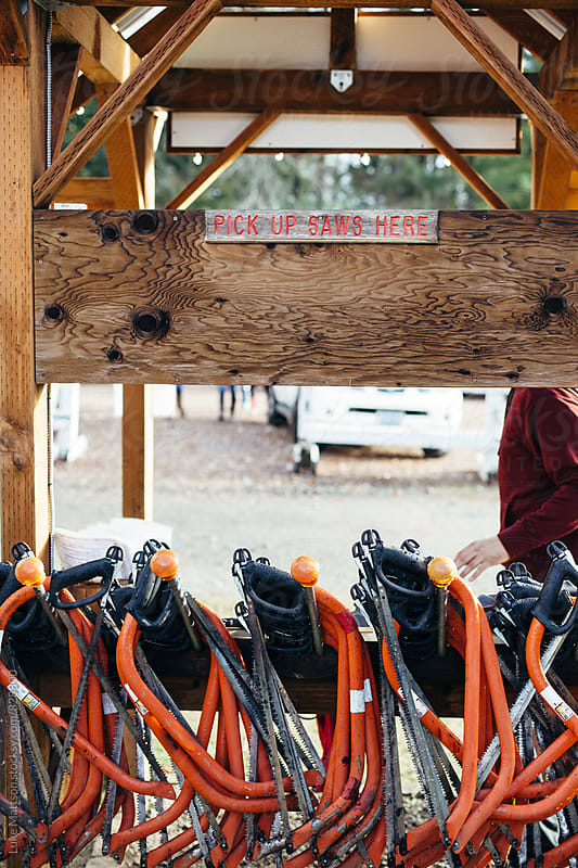 Bow Saws Hanging On Hooks At U-Cut Christmas Tree Farm by Luke Mattson for Stocksy United