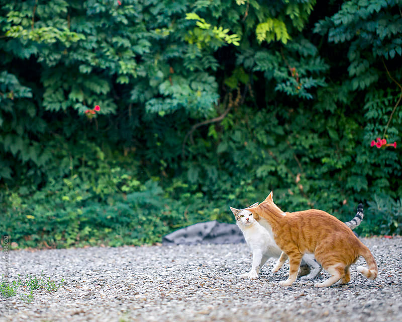 Two cats having an argument while standing in garden by Laura Stolfi for Stocksy United