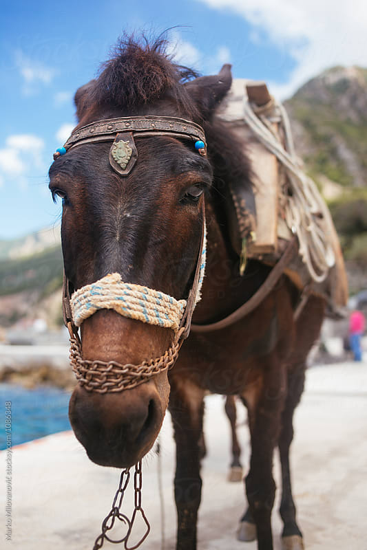 Horses on a bay by Marko Milovanović for Stocksy United