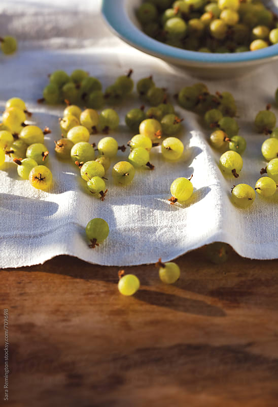 Gooseberries in Sunlight by Sara Remington for Stocksy United