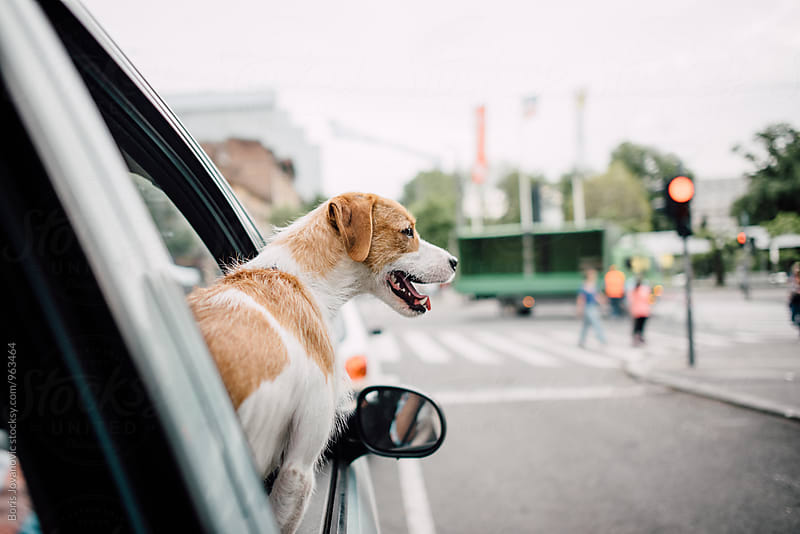 Dog looking through the car window by Boris Jovanovic for Stocksy United