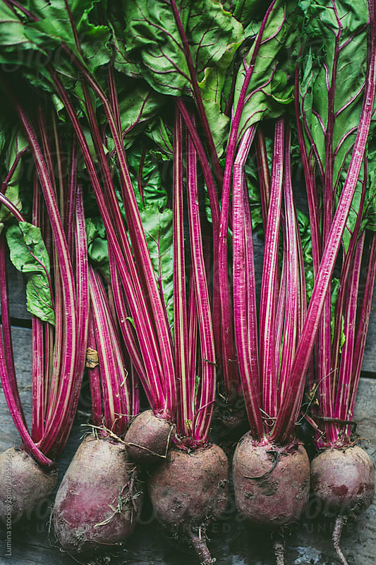 Beetroots on a Wooden Background by Lumina for Stocksy United