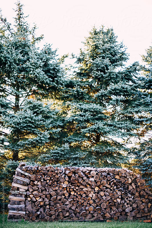 A large stack of firewood sits outside beside huge fir trees. by Holly Clark for Stocksy United
