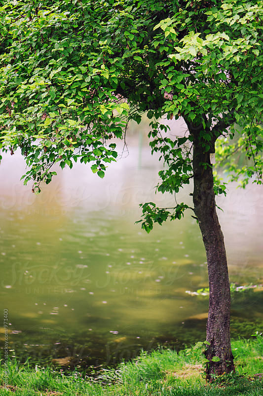 Tree near a river by Pixel Stories for Stocksy United