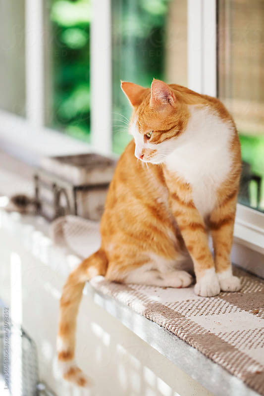 Pensive cat sits on sunny garden windowsill by Laura Stolfi for Stocksy United