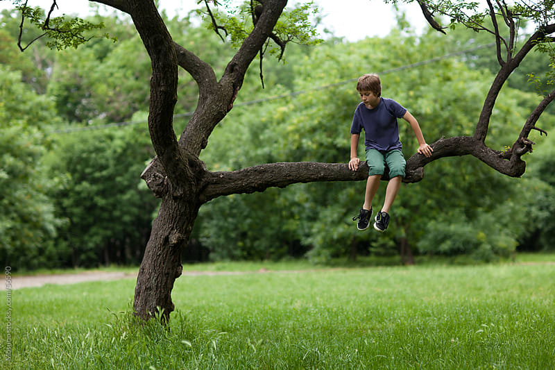 Boy playing on the tree. by Mosuno for Stocksy United