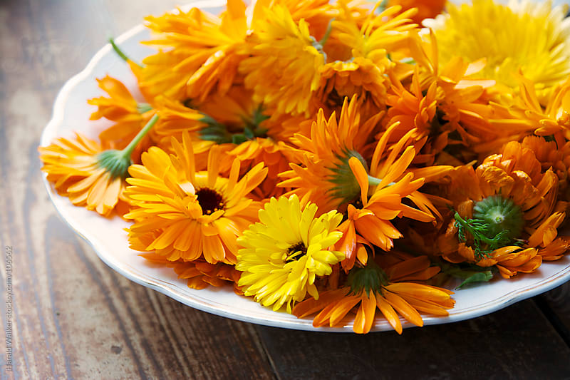 Calendula flowers by Harald Walker for Stocksy United