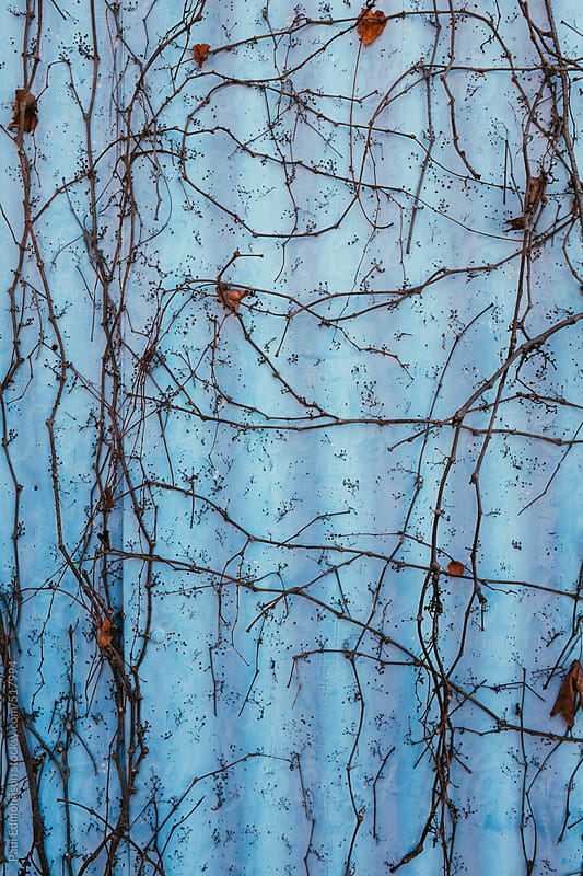 Vines climbing on corrugated metal warehouse wall by Paul Edmondson for Stocksy United