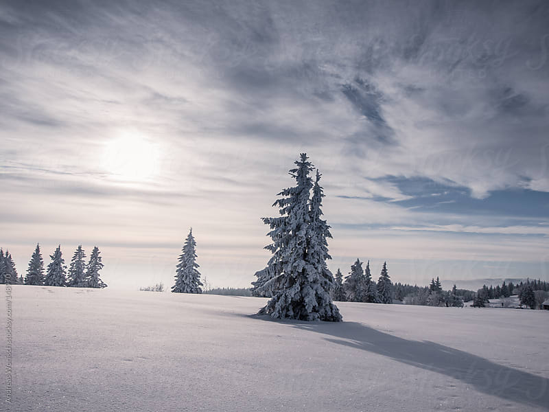 Snow Covered Fir with Shadow from Setting Sun by Andreas Wonisch for Stocksy United