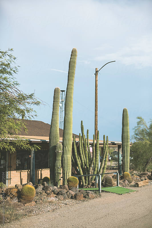 cactus garden infront of abandoned building by Image Supply Co for Stocksy United