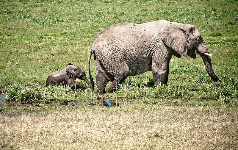 Baby elephant following its mum in a mudy area, Kenya by Marta Muñoz-Calero Calderon for Stocksy United