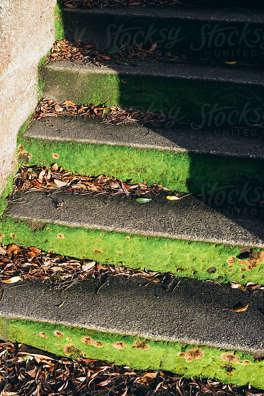 Moss covered stairs and shadow by Paul Edmondson for Stocksy United