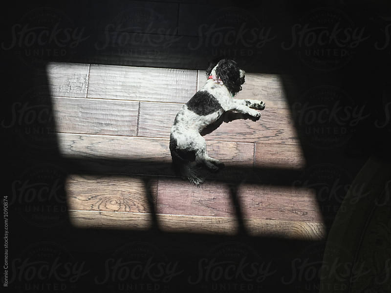 Dog Sleeping In Sun by Ronnie Comeau for Stocksy United