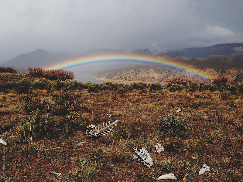 Rainbow Over Bones by Kevin Russ for Stocksy United
