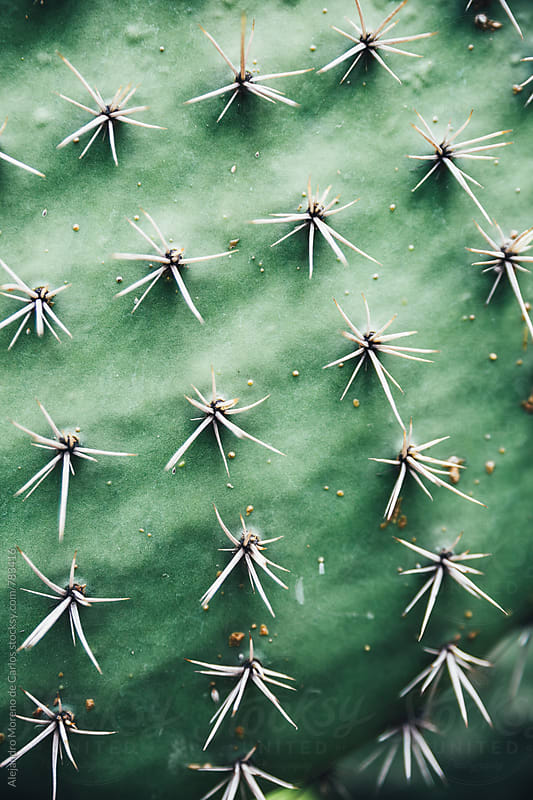 Close up green cactus plant with thorns  by Alejandro Moreno de Carlos for Stocksy United