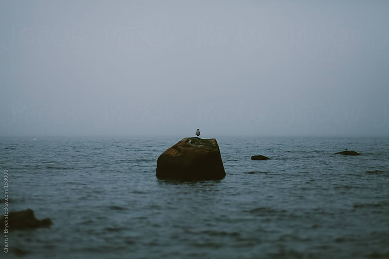 Bird sits on a large boulder in the ocean. by Cherish Bryck for Stocksy United