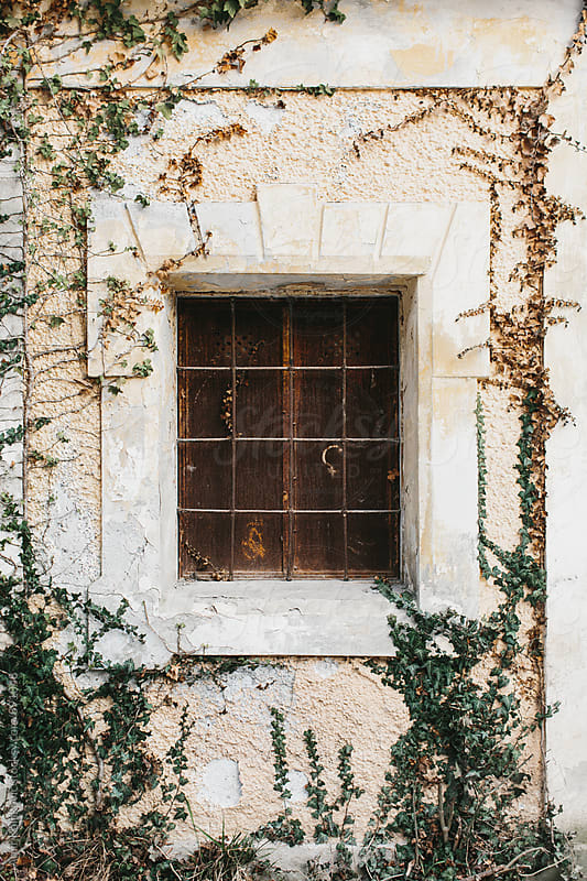Exterior of old window with ivy vines by Amir Kaljikovic for Stocksy United