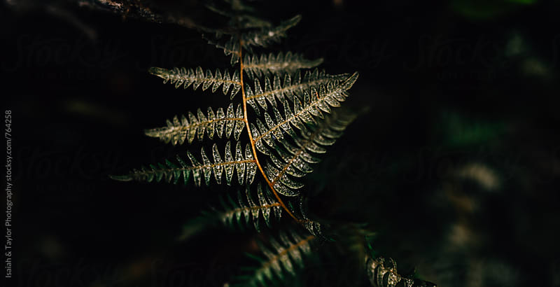 Detail of fern leaves by Isaiah & Taylor Photography for Stocksy United