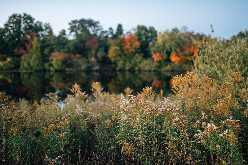 wild goldenrod flowers in autumn by Deirdre Malfatto for Stocksy United