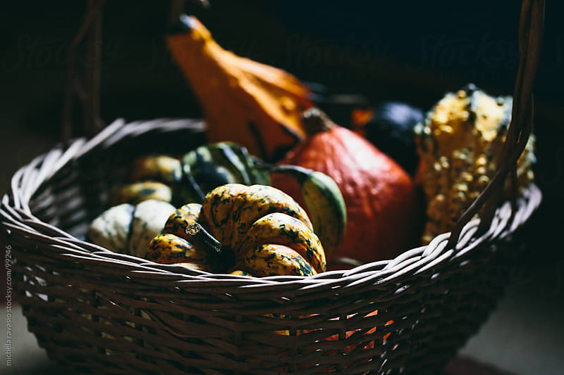 Pumpkins by michela ravasio for Stocksy United