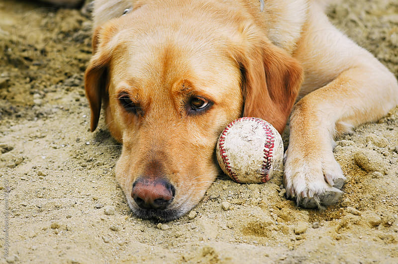 Dog Waits to Play Ball by Rob Sylvan for Stocksy United