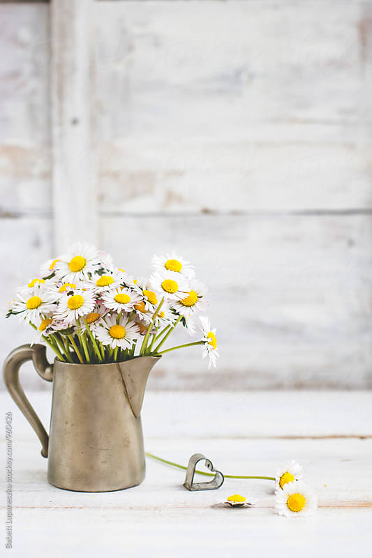 Wild daisies in pewter jug on table by Babett Lupaneszku for Stocksy United