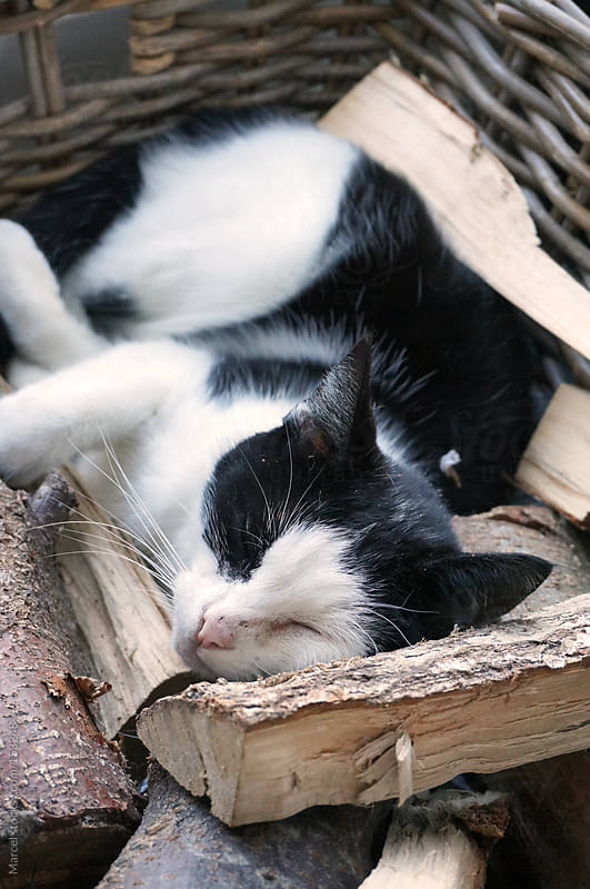 Cat sleeping in basket with firewood by Marcel for Stocksy United