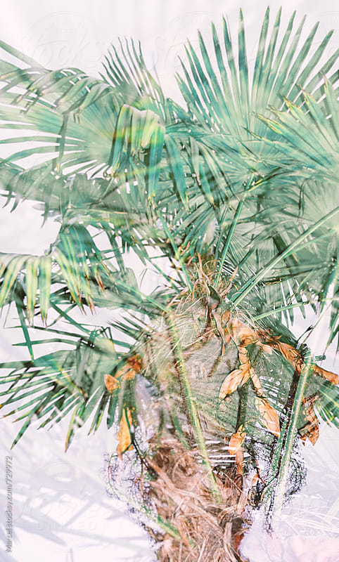 Messy palmtree doubly exposed by Marcel for Stocksy United