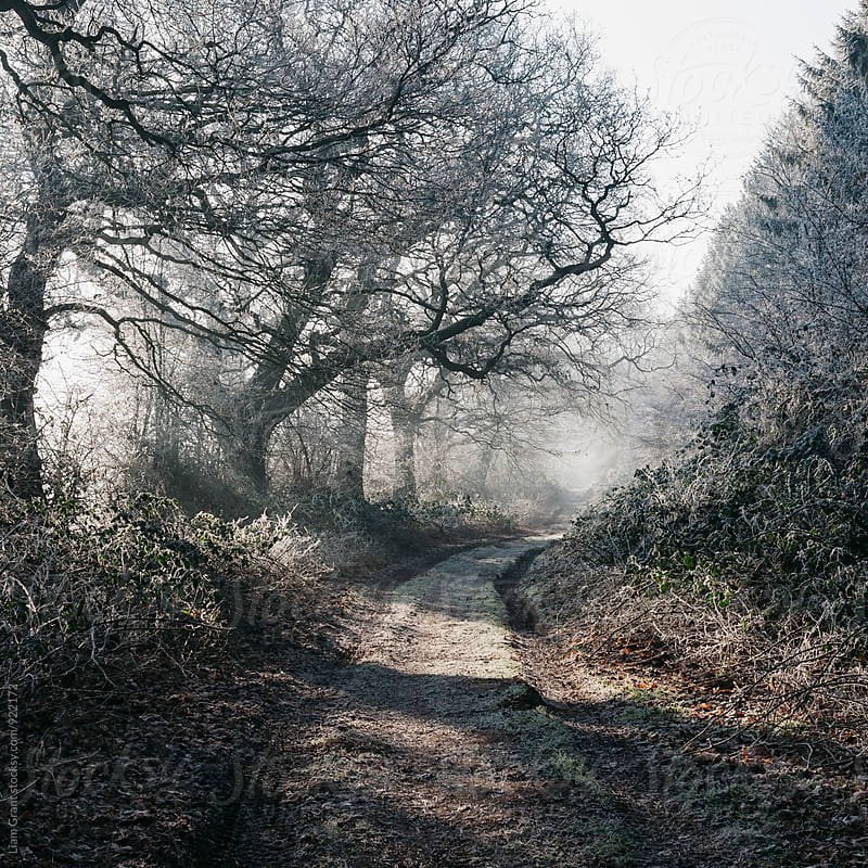 Rays of sunlight on a frost covered track through misty woodland. Norfolk, UK. by Liam Grant for Stocksy United