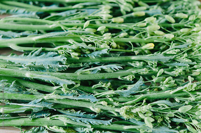 Raw Kale Raab, the edible young green flowers of the kale plant by Deirdre Malfatto for Stocksy United