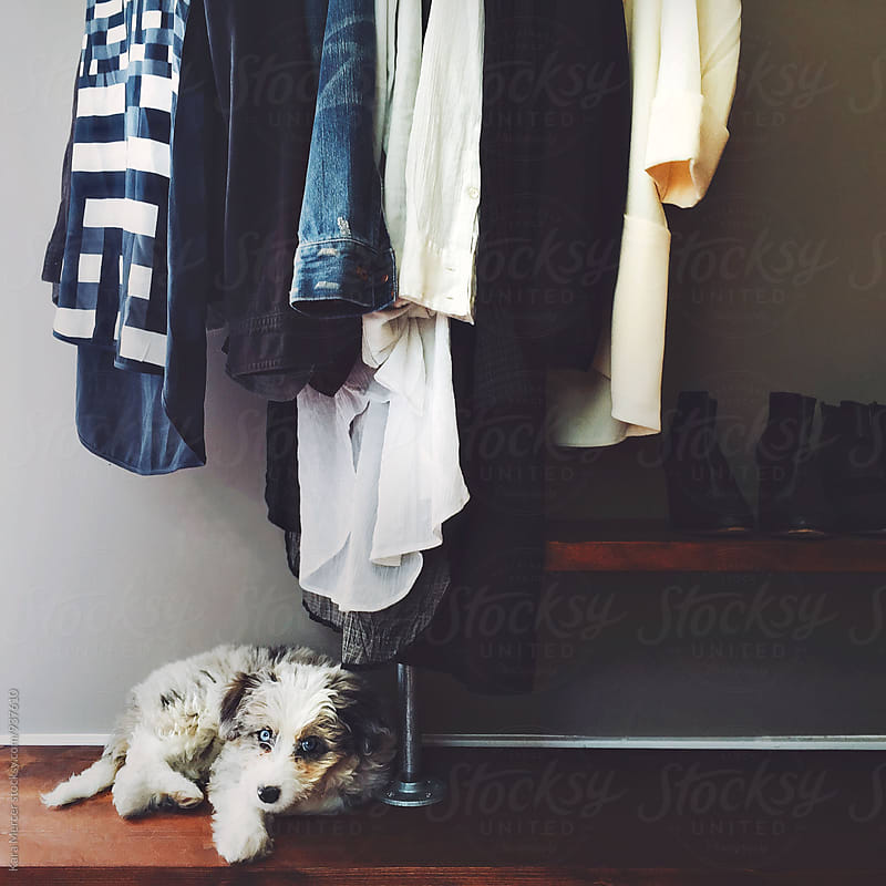 Puppy on a Clothing Rack by Kara Mercer for Stocksy United